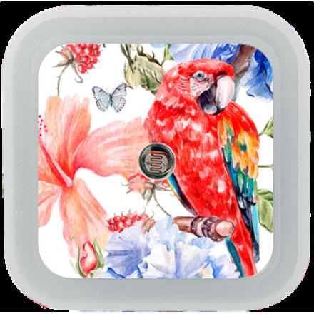 NOCNA LAMPKA DO KONTAKTU LED CZUJNIK ZMIERZCHU Czerwona papuga